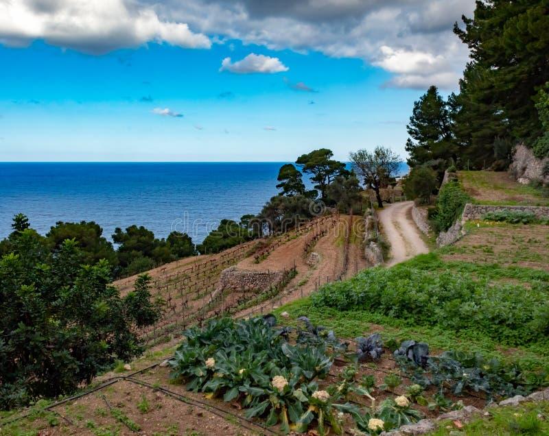 地中海庭院在马略卡 免版税库存照片