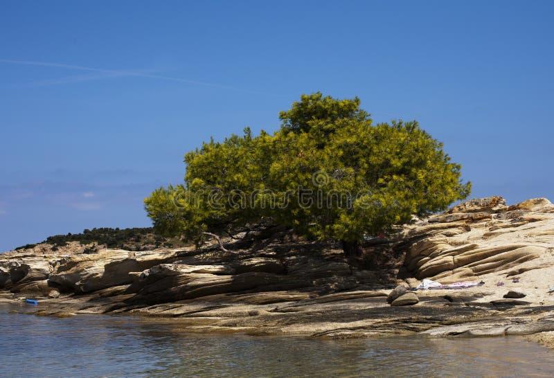 地中海植被 库存照片