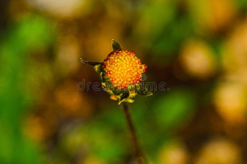 地中海污点salentina的植物群 免版税库存照片