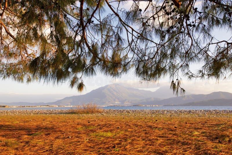 地中海海岸、杉树和沙子在夏天晴天支持 库存图片
