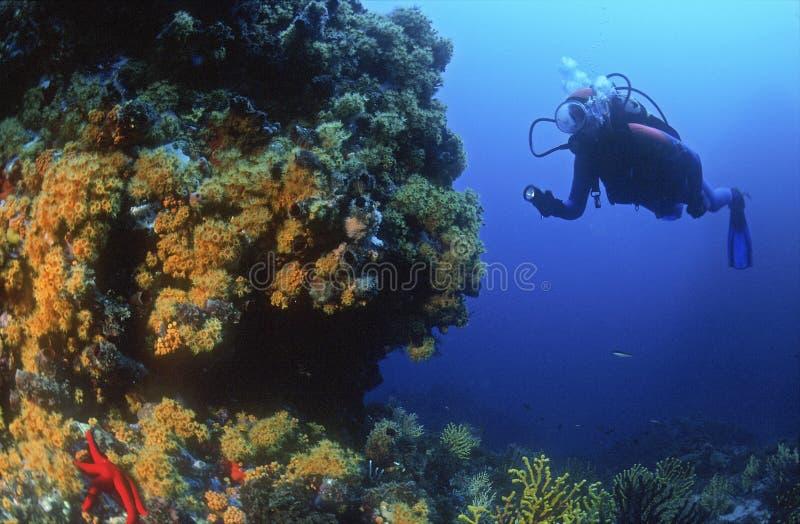 地中海海底 免版税图库摄影