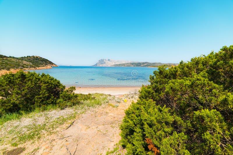 地中海由海洗刷 免版税库存图片