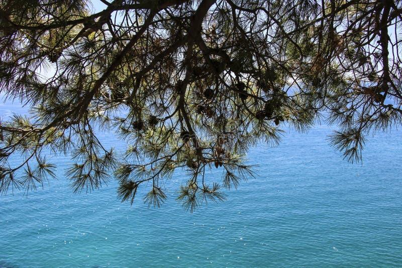 地中海的看法通过杉木和锥体分支  免版税库存照片