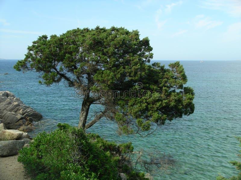 地中海结构树 免版税库存图片