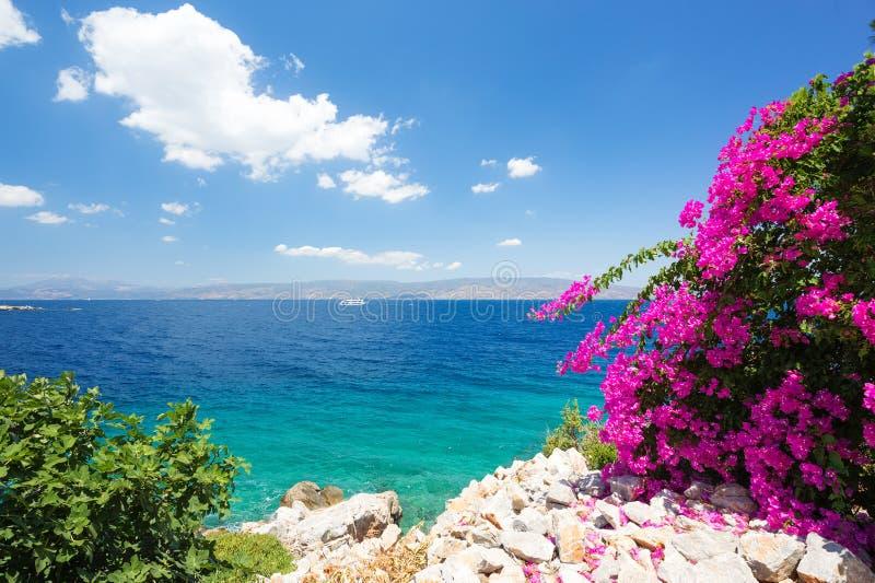 地中海风景 天空蔚蓝和清楚的水与美丽的花在前景 免版税图库摄影