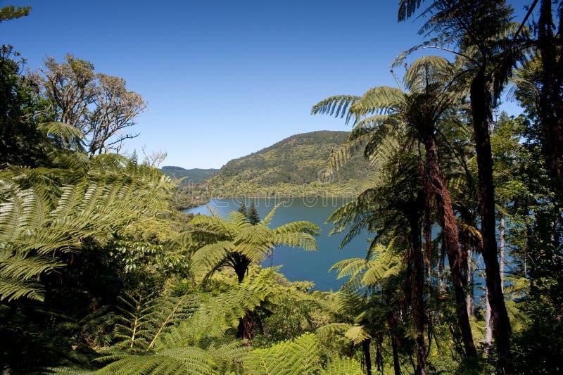 地区湖rotorua 库存图片
