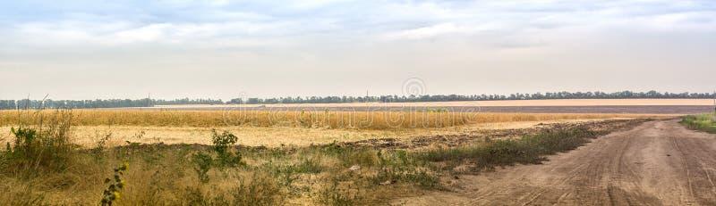 地区莫斯科一幅全景 与一块多灰尘的路和麦田的国家风景summe天 免版税图库摄影