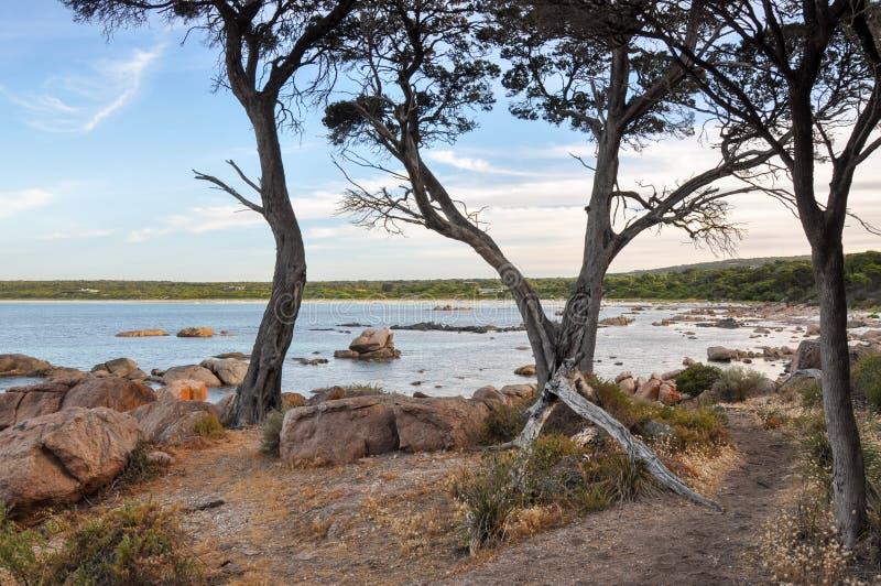 地堡海湾:Treed海景 图库摄影