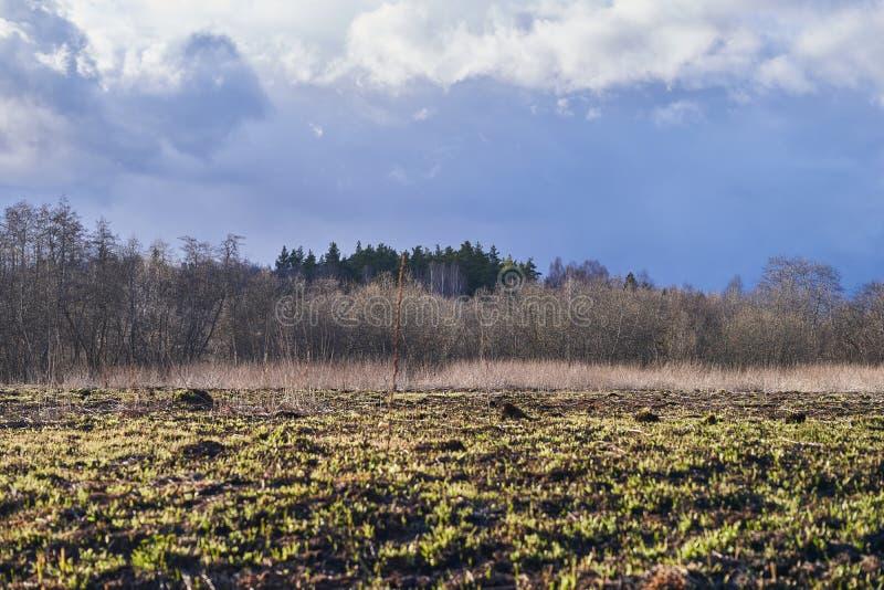 地平线上树木干草云的乡村景观 免版税库存照片