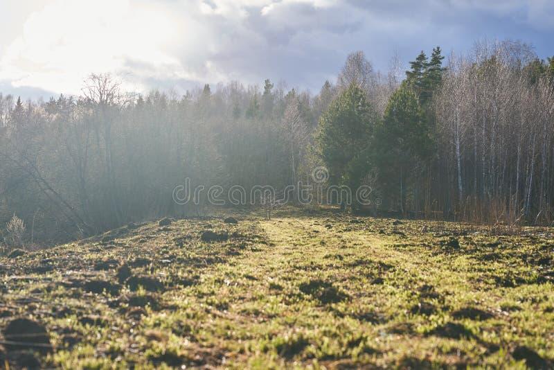 地平线上树木干草云的乡村景观 免版税库存图片