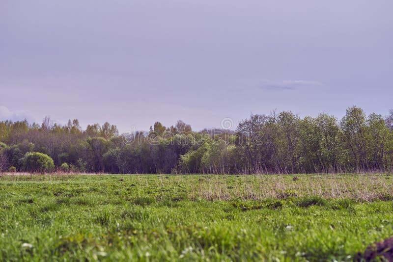 地平线上的乡村风景 库存照片