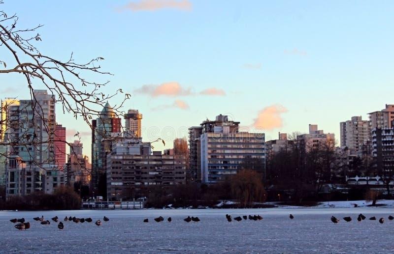 地平线,日落,温哥华市 免版税库存照片