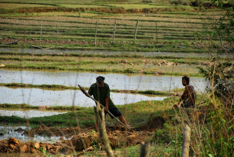 地方农夫在瓶子考古学站点附近平原冒他们的在稻田的生命的危险 免版税库存照片