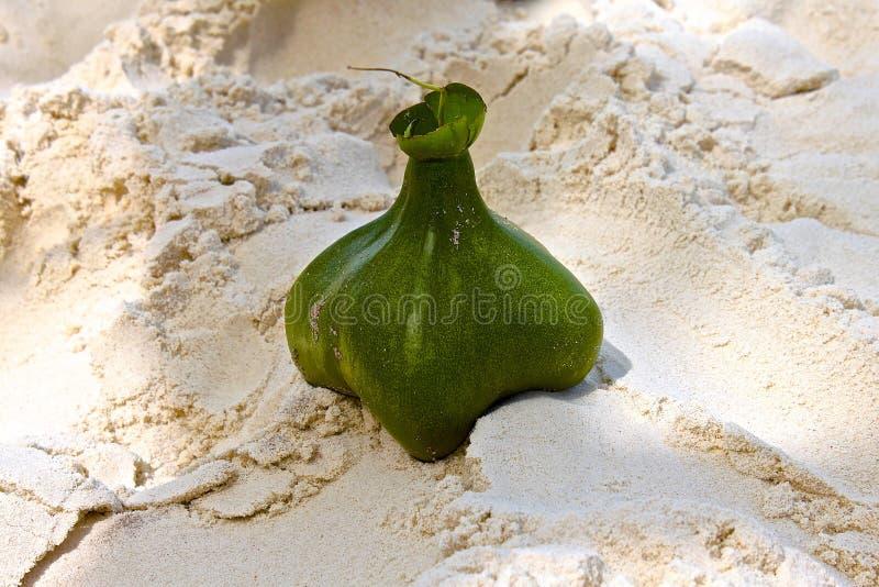地方性果子Similan海岛 免版税库存照片