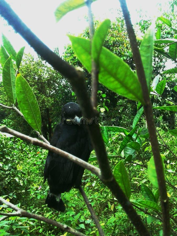 地方性鸟在斯里兰卡 免版税库存图片