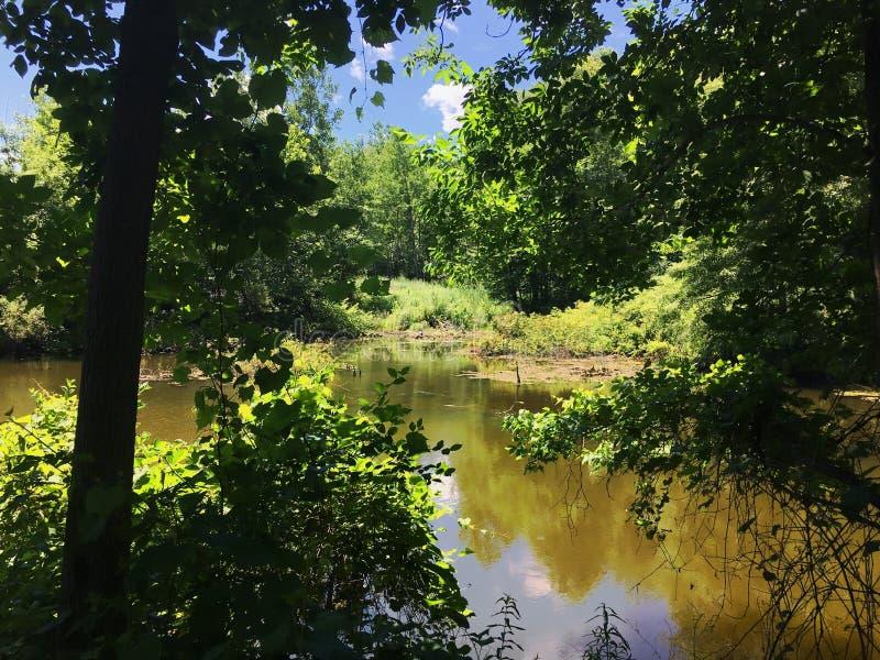 地方池塘在康涅狄格 库存图片