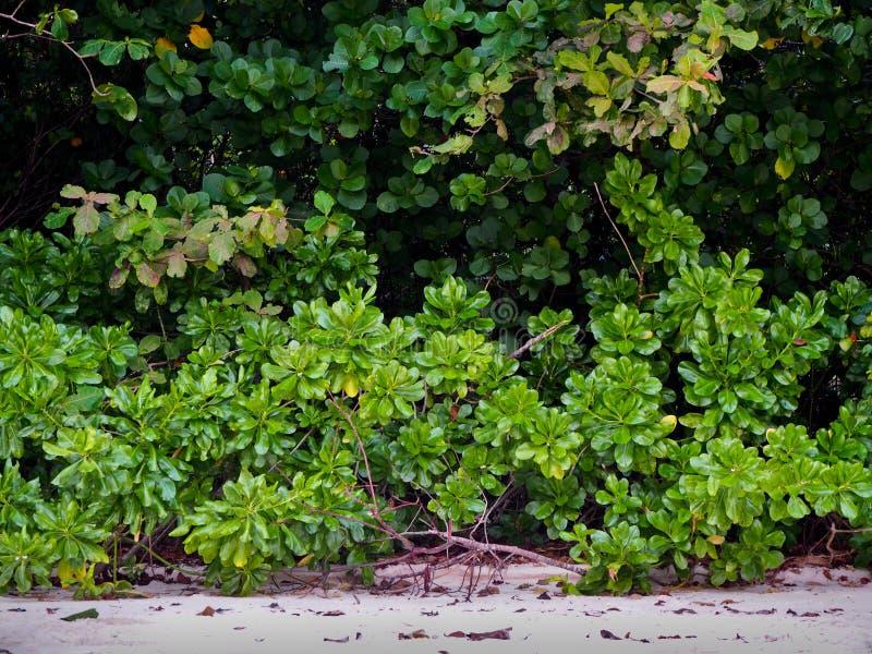 地方海植物灌木海滩的 库存照片