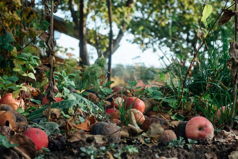 地球上有许多红苹果 免版税库存照片