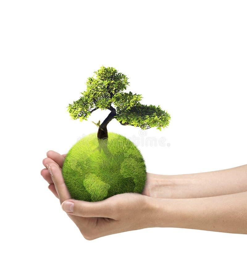 地球和树在手上 免版税库存图片