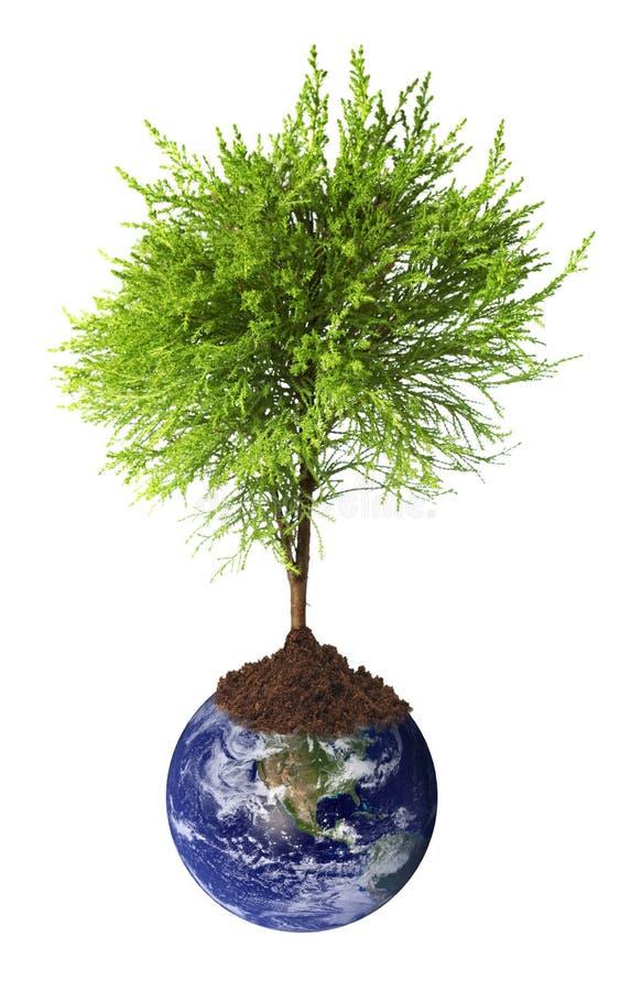 地球生长结构树 免版税库存照片