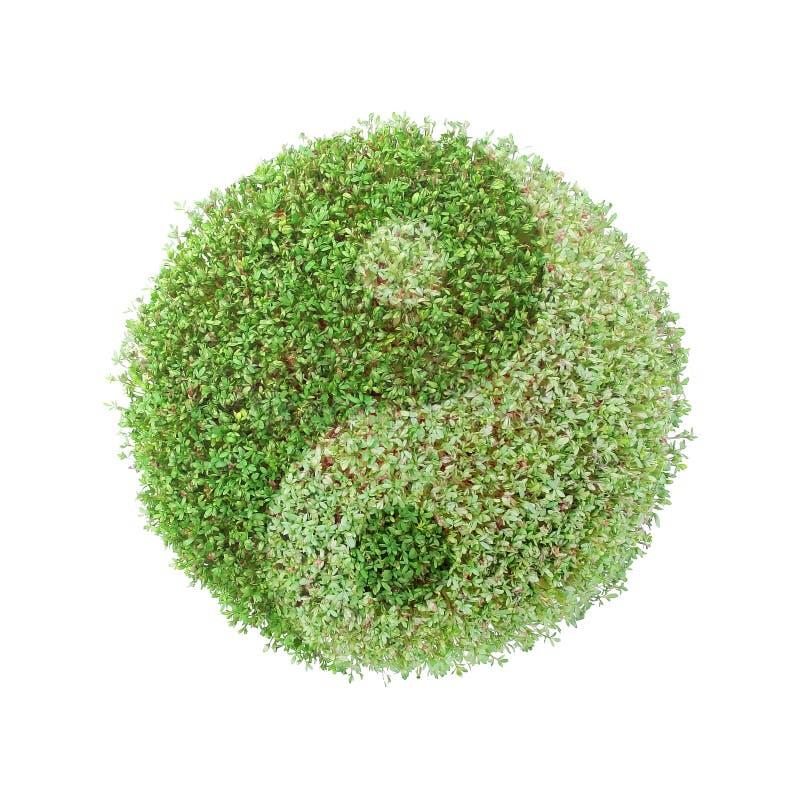 地球ying绿色的杨 图库摄影