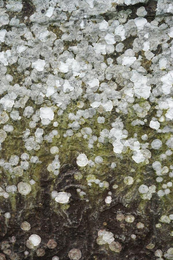 地衣报道了石垂直的抽象背景 库存照片