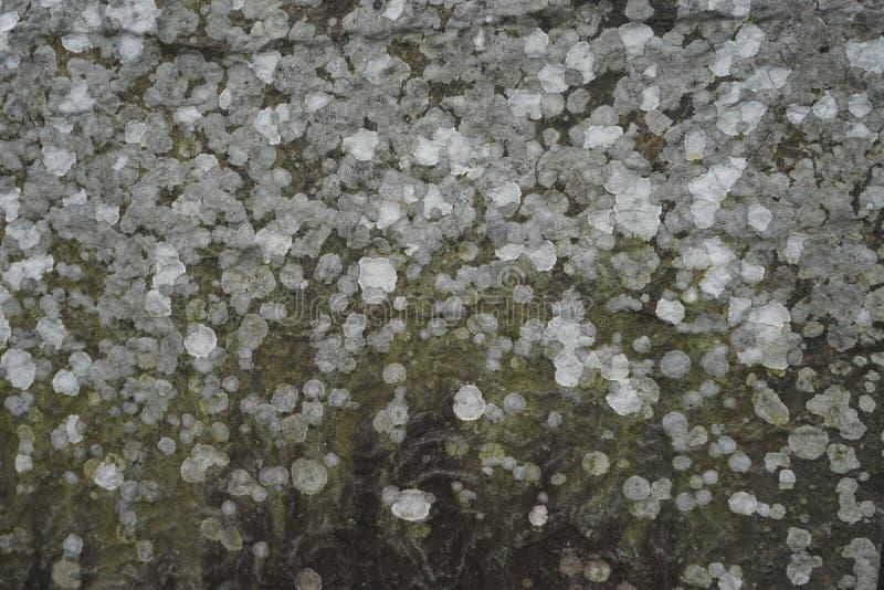 地衣报道了石水平的抽象背景 免版税库存图片