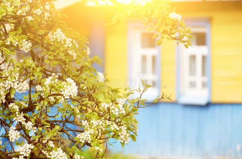 地道老小屋和一棵开花的苹果树附近 免版税库存照片