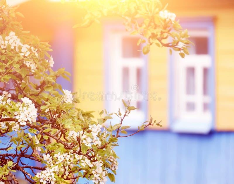 地道老小屋和一棵开花的苹果树附近 乌克兰村庄 免版税库存图片