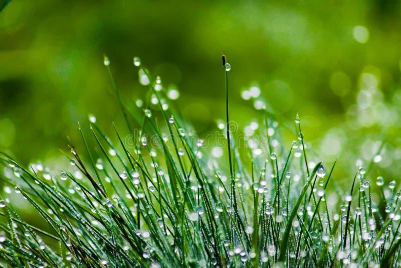 满地露水的绿草,被弄脏的背景 免版税库存照片