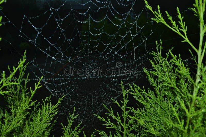 满地露水的spiderweb 免版税图库摄影