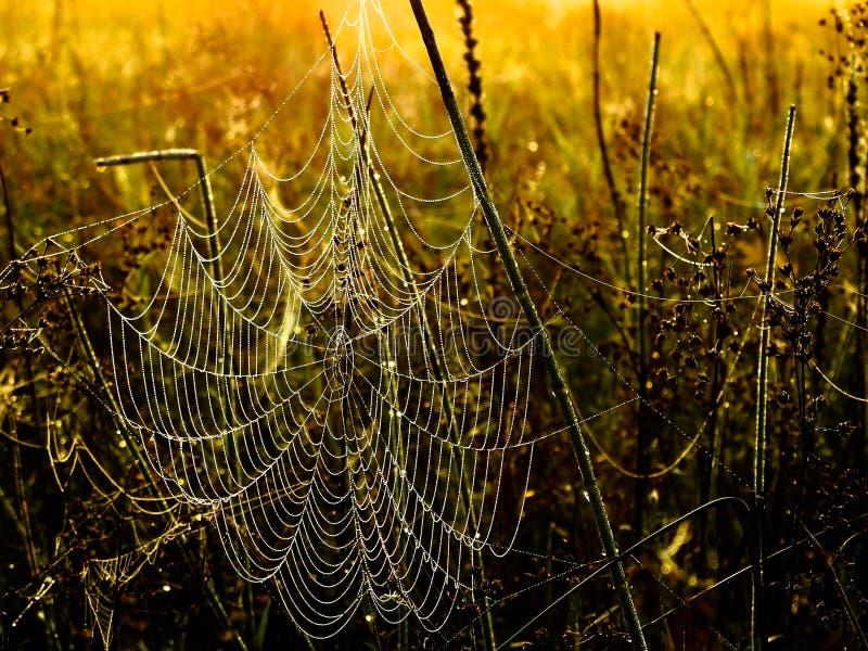 满地露水的spiderweb 免版税库存图片