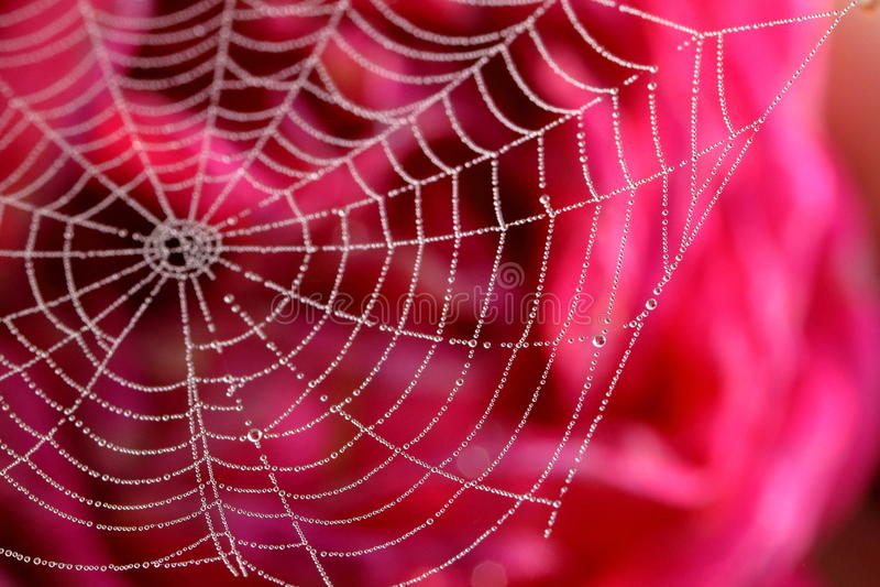 满地露水的spiderweb 免版税库存照片