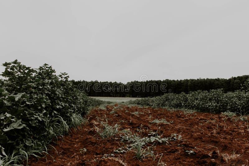 地面和森林 免版税库存图片
