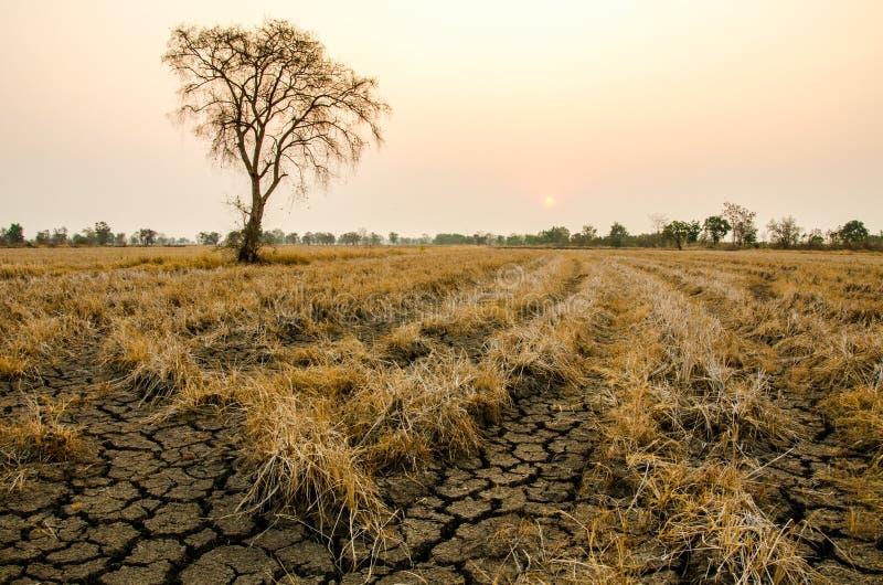 地面天旱 库存图片