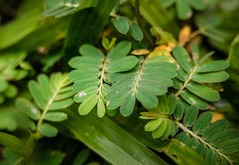 地面灌木:鳍类的叶子和草 免版税图库摄影