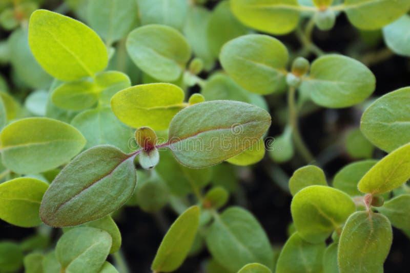 地面的背景的绿色年幼植物 免版税库存照片