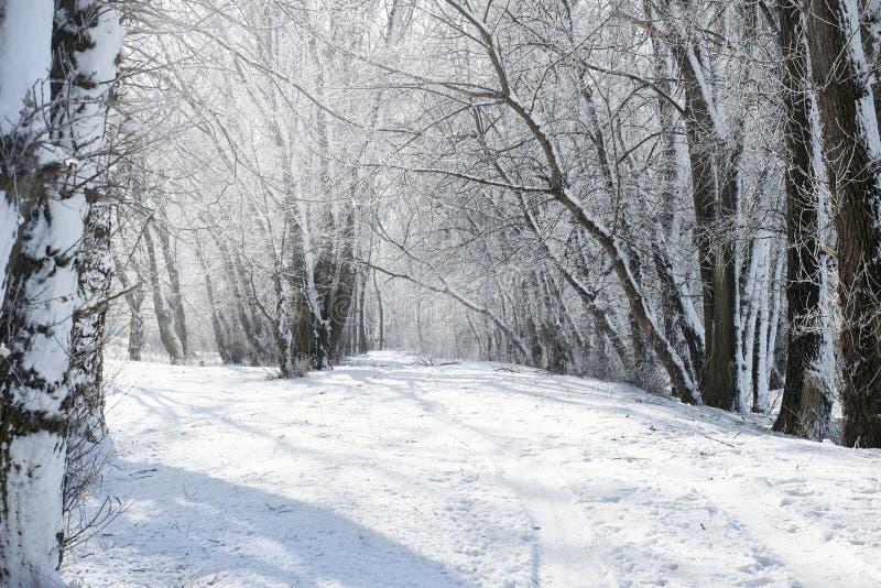 地面路在冬天森林里,与雪的美好的狂放的风景和蓝天,自然概念 库存照片