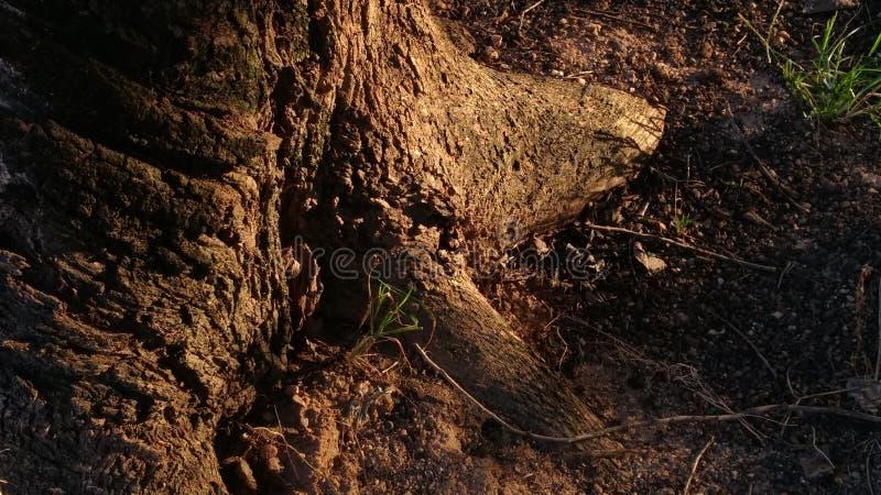 地面&树 图库摄影