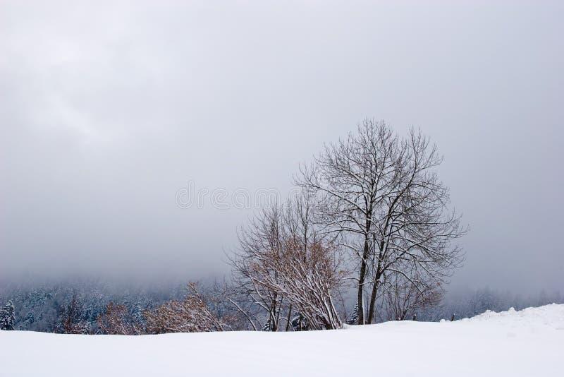 场面冬天 免版税图库摄影