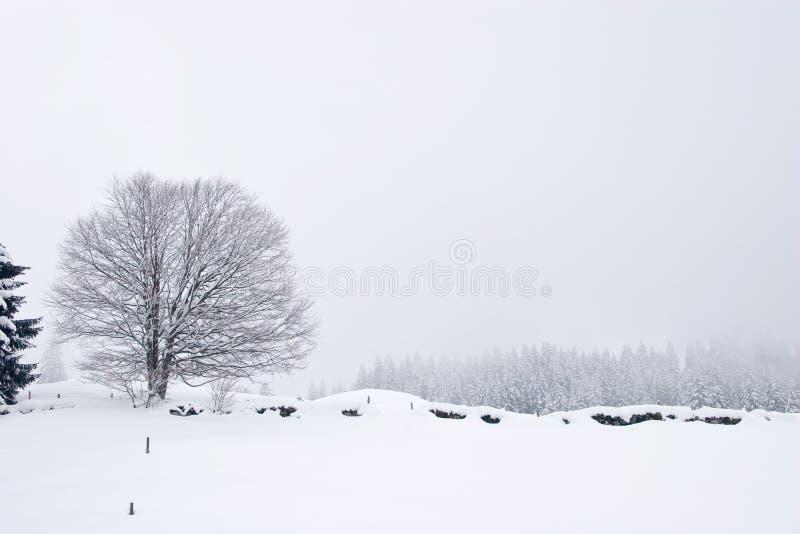 场面冬天 库存照片