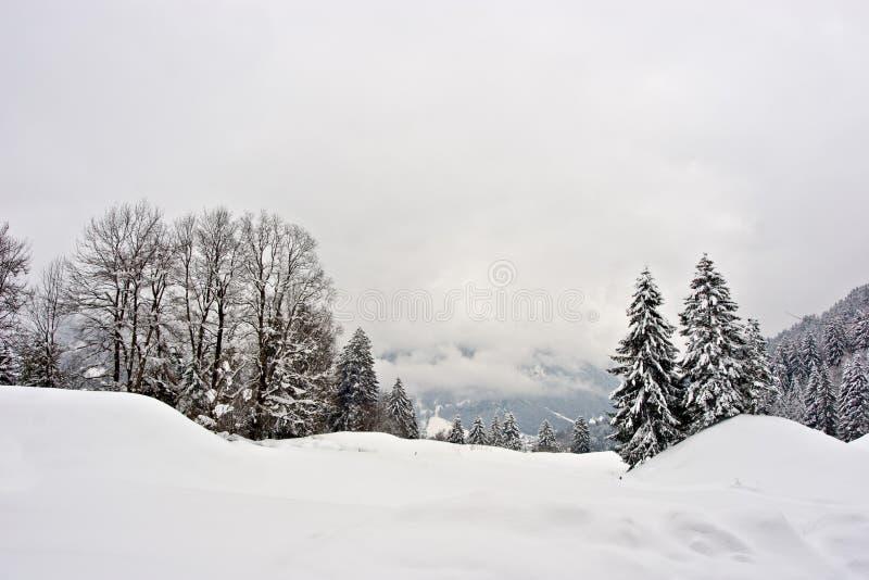 场面冬天 免版税库存图片