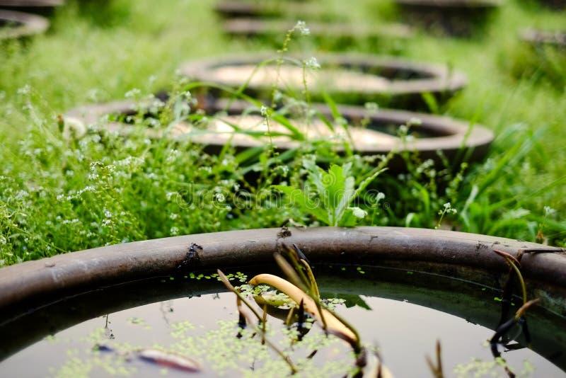场面:亚洲中国莲花庭院 免版税图库摄影
