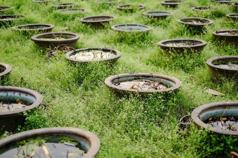 场面:亚洲中国莲花庭院 库存图片