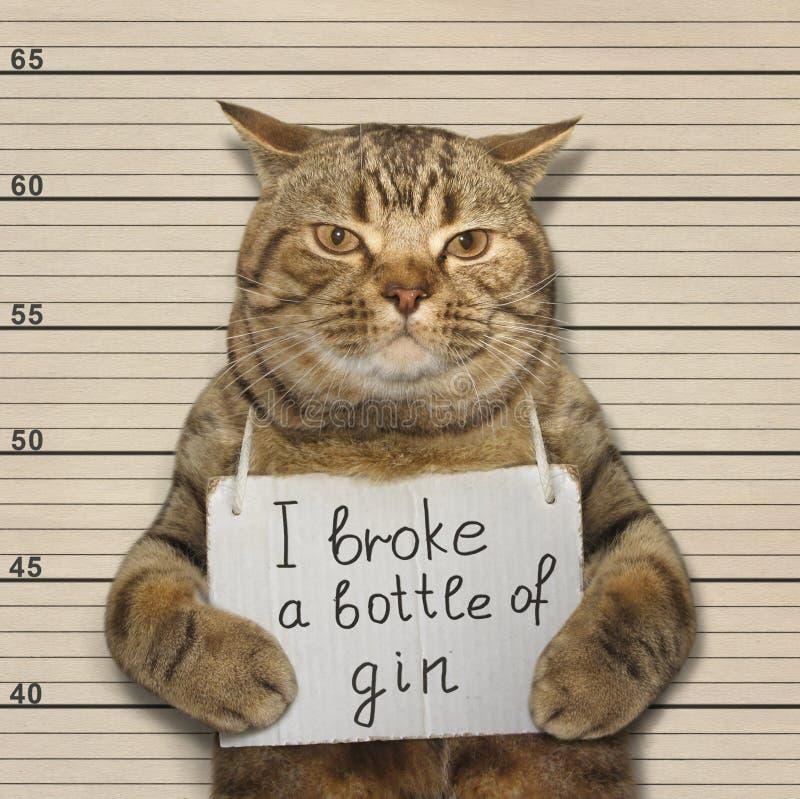 坏猫打破了一个瓶杜松子酒 免版税库存照片
