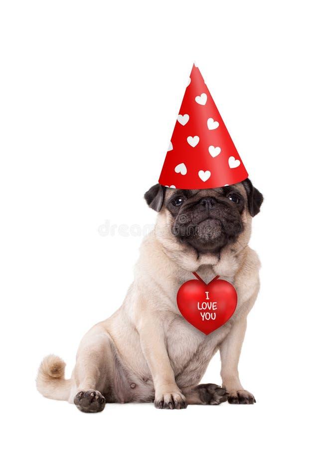 坐下与红色我爱你心脏和党帽子的可爱的逗人喜爱的华伦泰` s天小狗哈巴狗狗有心脏的 免版税图库摄影