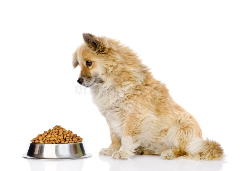 坐与一碗的小狗干狗食 查出在白色 免版税库存照片