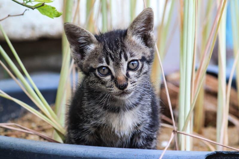 坐在一个室外庭院里的一只逗人喜爱的小的小猫 免版税库存照片