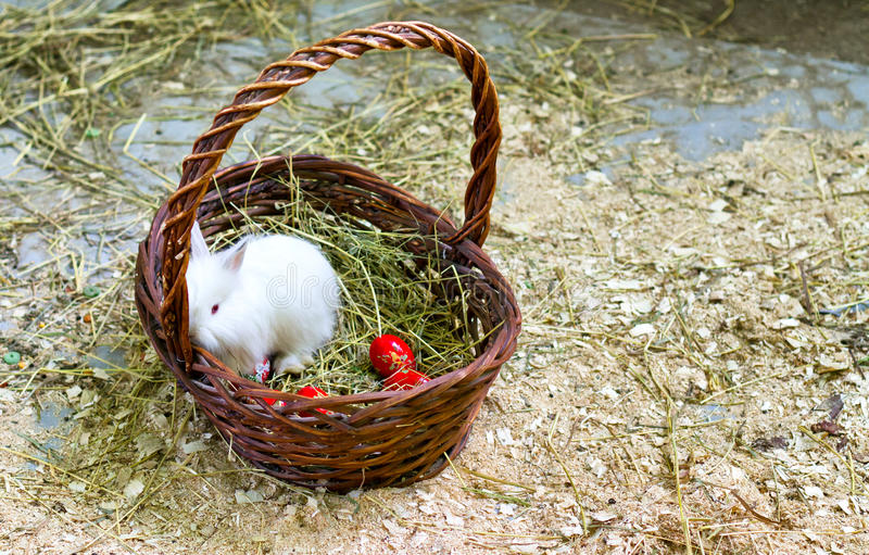 坐在一个篮子的兔宝宝用复活节彩蛋 免版税库存图片