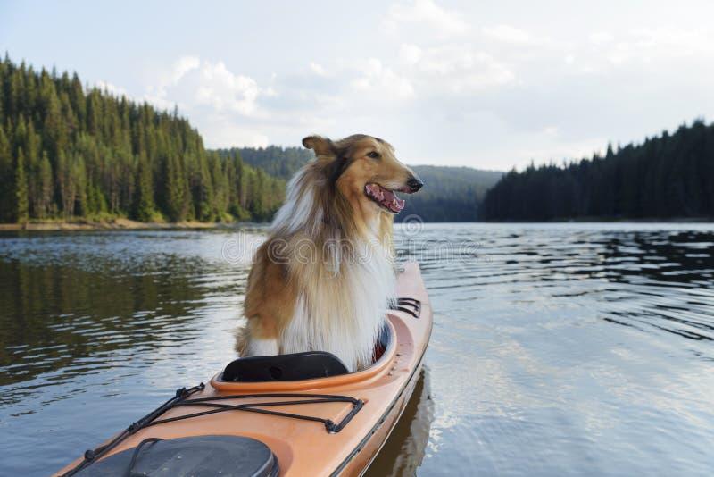 坐在一艘皮船的苏格兰牧羊人在一个高山湖 库存图片